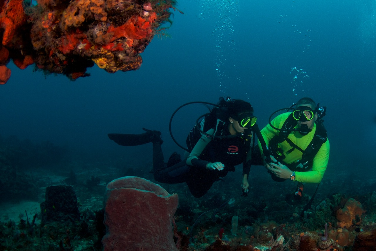 Gallery heres ed on a guided dive ed also offers naui dive certification lessons 1betcityfo Gallery